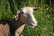 © ferme des cathelins - <em>Ot</em>
