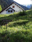 Le Lagopède Alpin 2