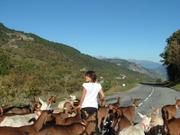 Ferme du Mont Thabor