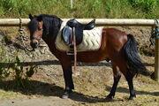 © la-norma-ranch-equestre - <em>DR OT La Norma</em>