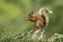 46 - Enduro - Rouge - l'écureuil