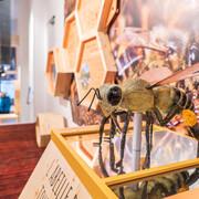 © Maison de l'abeille - <em>Vincent Lottenberg</em>