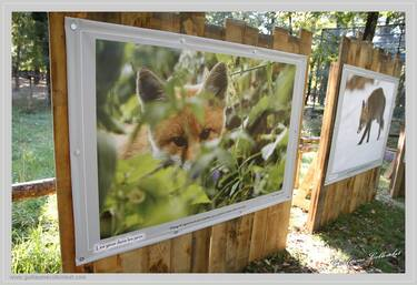 © avrieux-norma-exposition-animaux-redoute - <em>Mairie d'Avrieux</em>
